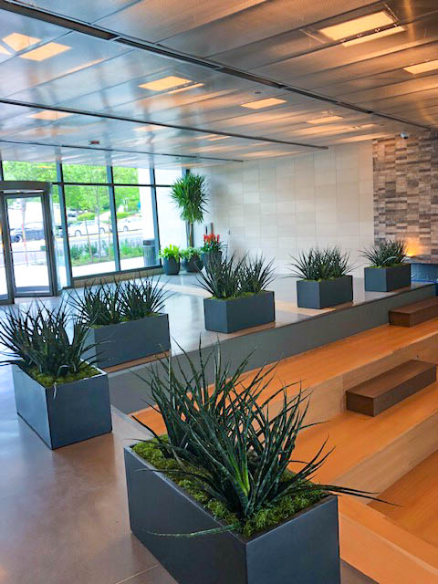 Office Plants Service Living Walls Botanical Designs